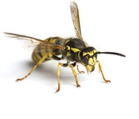 commercial pest control Seattle