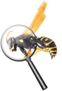 Seattle home pest inspection